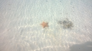 A Sea Star in Serenity Bay at Disney's Castaway Cay
